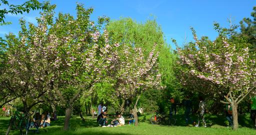 People Having Fun In The Japanese Garden Of Herastrau Public Park stock footage