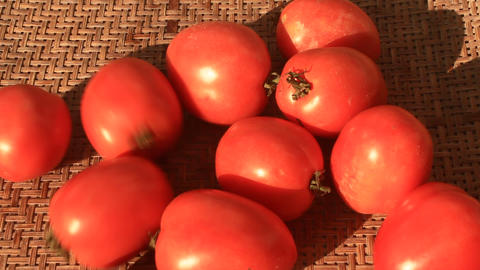 washed and processed tomatoes Footage