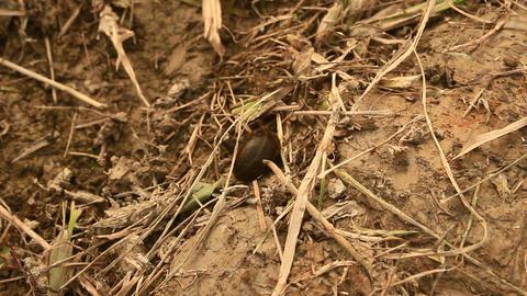 leech crawling on grass Footage