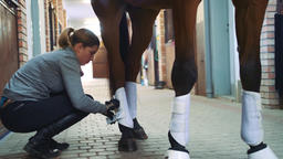 Woman banding legs of horse before ride Footage