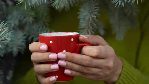 Woman hands holding a cozy red mug against the background of pine branches Archivo