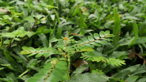 Strange exotic orange tropical insect mosquito on a green wild plant Footage