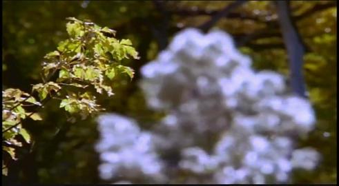 Park's wildlife Footage