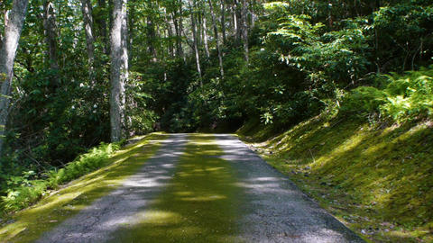 Moss covered road is surrounded by mature trees and a moss covered hillside Live Action