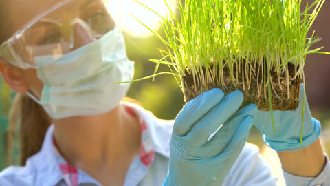 Woman scientist in goggles and a mask examines a sample of soil and plants ビデオ