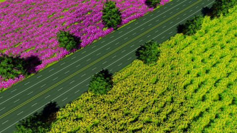The road divides the fields of red and yellow ビデオ