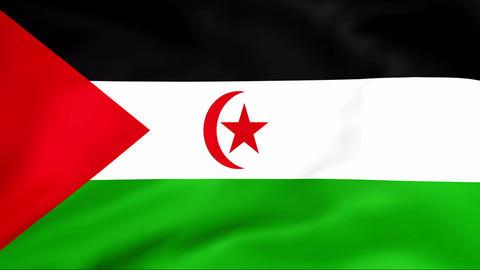Flag Of Sahara Arab Democratic Republic Stock Video Footage