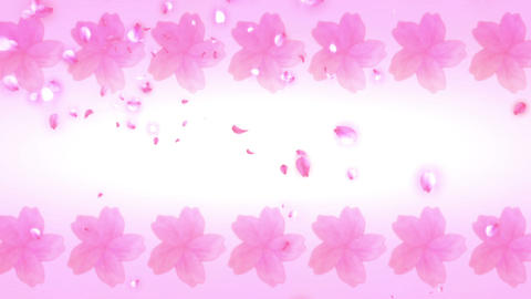 Cherry  Blossoms  New  Year  01 A stock footage