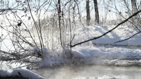 Winter morning in forest Stock Video Footage