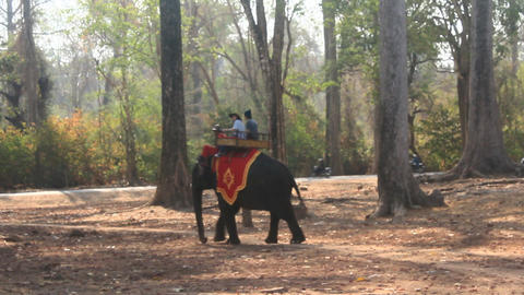 tourists riding elephants in Cambodia Live Action