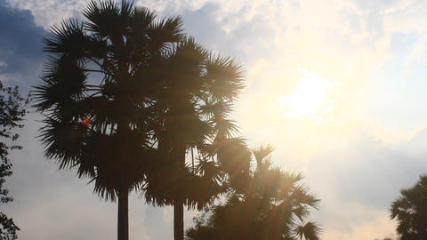 palm trees, Cambodia Live Action