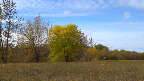Tree with yellowing leaves on autumn meadow. Early autumn Live Action