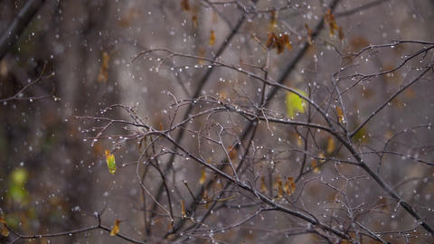 Autumn snowfall scene Footage