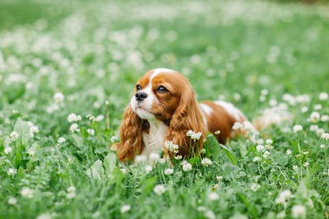 Nice little dog lying on the grass フォト
