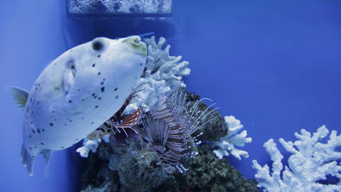 The underwater world of marine life 21 Live Action