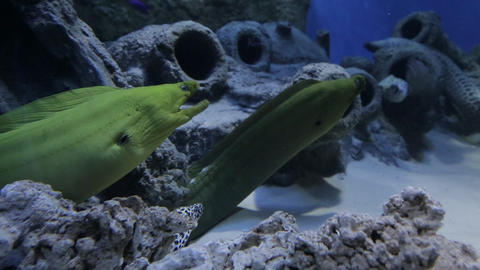 The underwater world of marine life 28 Live Action