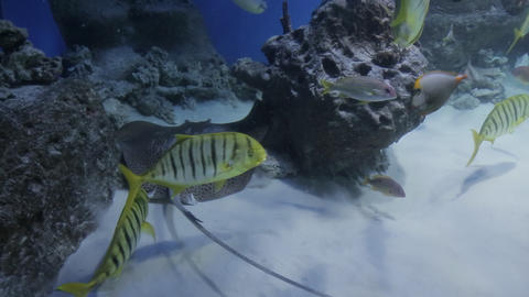 The underwater world of marine life 31 Live Action