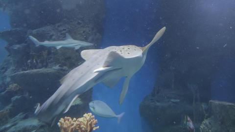 The underwater world of marine life 34 Footage