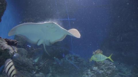 The underwater world of marine life 43 Footage