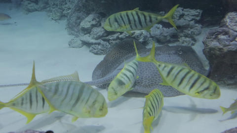 The underwater world of marine life 45 Live Action