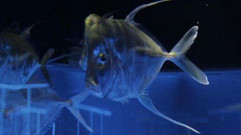 The underwater world of marine life 51 Footage