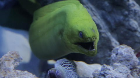 The underwater world of marine life 57 Live Action