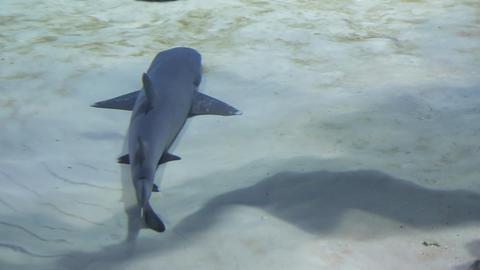 The underwater world of marine life 62 Footage