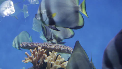 The underwater world of marine life 63 Live Action