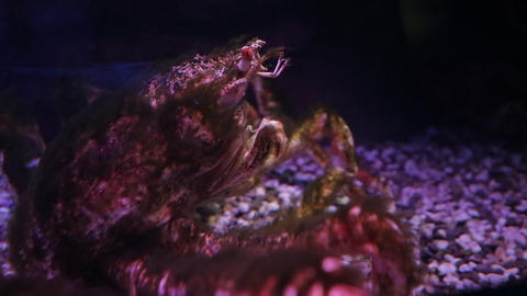 The underwater world of marine life 65 Live Action