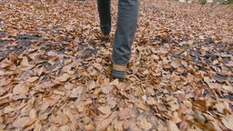 Walking through autumnal forest. Autumnal leaves Footage