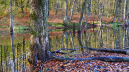 Autumn in a swampy forest Footage