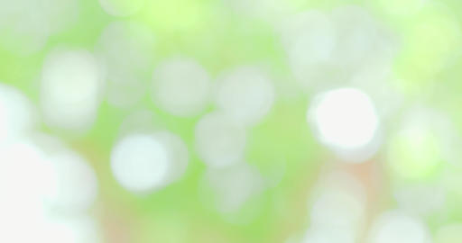 blur of nature green Footage