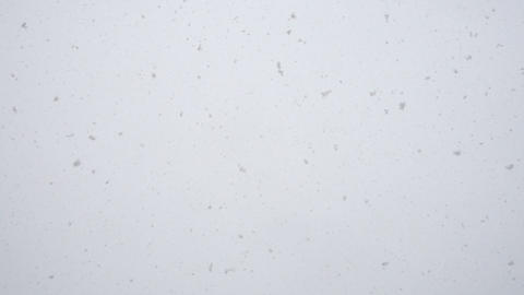 Snow falling at winter day, qualitative slow motion Footage
