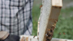 Beekeeper Brushing Brood Chamber Frame 2 Live Action