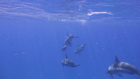 Fantastic dive with dolphins Footage
