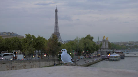 Gull against evening Paris. View with Eiffel Tower and waterfront, France GIF