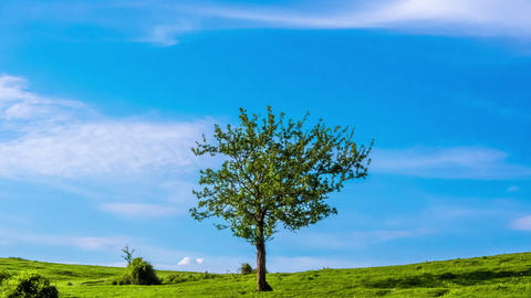 Lonely tree on a Sunny day Footage