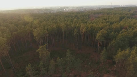 A top view of forest landskape. The quadcopter flies over the coniferous forest Footage