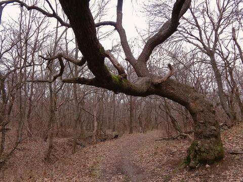 Spooky Tree Photo