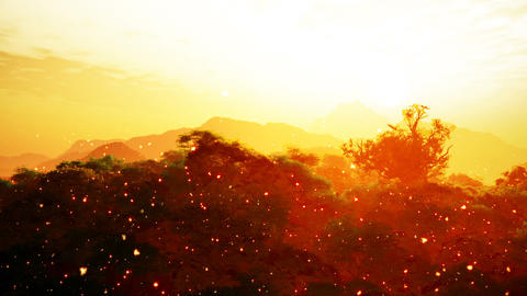 Wonderful Glowy Sunset with Fire Flies over Lush Jungle 3D Animation Animation