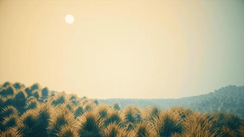 4K Semi Desert Shrublands in Sandstorm 3D Animation Animation