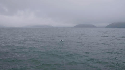 Aerial view ocean water, island on cloudy skyline and sea bird floating in water Footage