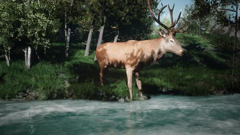 Beautiful Sunny spring forest and a deer that drinks water from the stream. 3D Photo