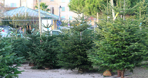Christmas Trees For Sale Footage