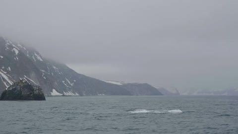 Killer whale swimming in sea water om snowy mountain and cliff landscape Live Action