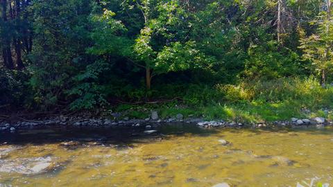 Heron Bird Walking Along a River. Rare Bird Walking Along a Creek Water in North Live Action