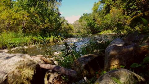 Heron Bird Walking Along a River. Rare Bird Walking Along a Creek Water Footage