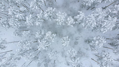 Low flight over snowy spruce forest in winter Footage