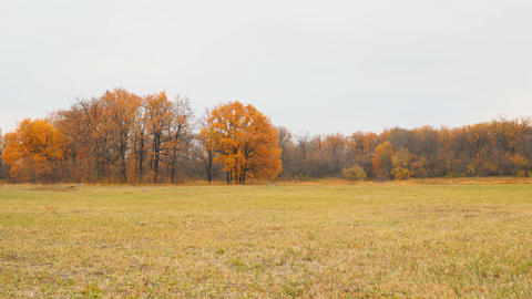 Autumn meadow in front of yellow autumn forest Footage