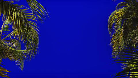 The branches of palm tree in the wind on blue screen. Beautiful summer looped Animation